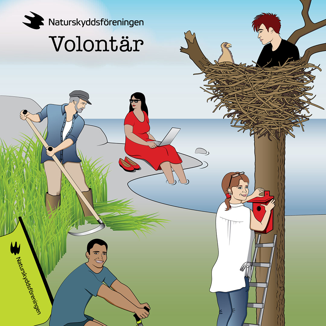 Del av illustrerad framsida till Naturskyddsföreningens folder för volontärer